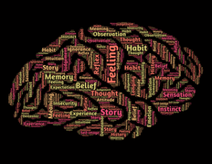 大腦功能圖